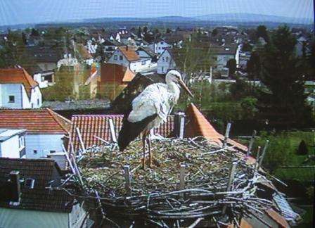14.04.2012storch
